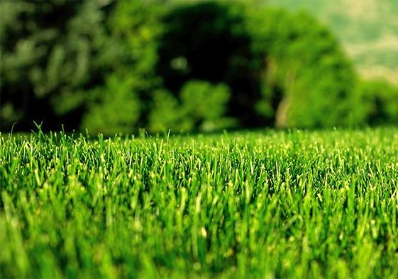 Идеальный газон – легко!